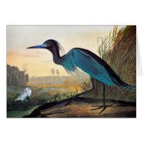 Audubon: Little Blue Heron