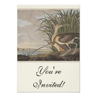 Audubon Long-Billed Curlew Sandpiper Bird 5x7 Paper Invitation Card