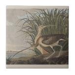 Audubon Long-Billed Curlew Sandpiper Bird Ceramic Tile