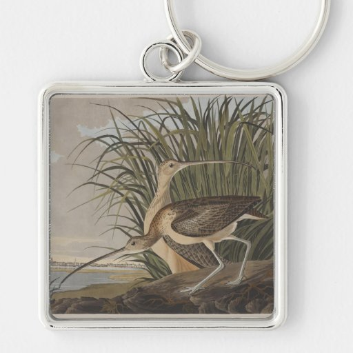 Audubon Long-Billed Curlew Sandpiper Bird Silver-Colored Square Keychain