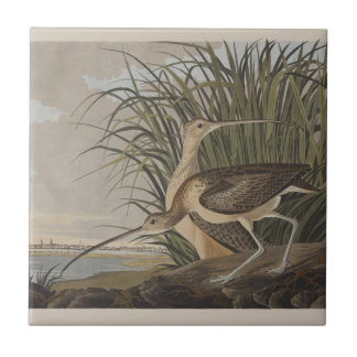 Audubon Long-Billed Curlew Sandpiper Bird Tiles