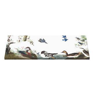 Audubon Loons Grebes Birds Wrapped Canvas Print