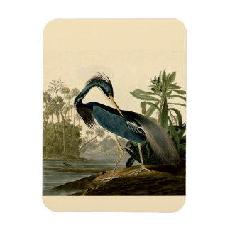 Audubon Louisiana Heron Magnet