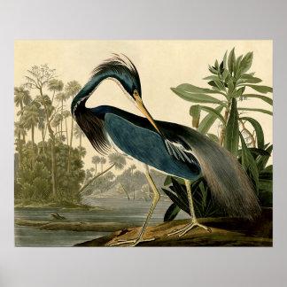 Audubon Louisiana Heron Poster
