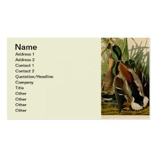 Audubon Mallard duck Bird Vintage Print Business Card Templates