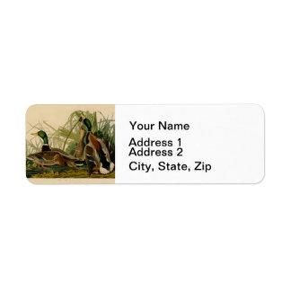 Audubon Mallard duck Bird Vintage Print Return Address Labels