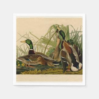 Audubon Mallard duck Bird Vintage Print Standard Cocktail Napkin