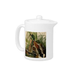 Audubon Mallard duck Bird Vintage Print Teapot