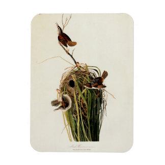 Audubon Marsh Wren Magnet