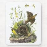 Audubon Meadowlard del este Tapetes De Ratones