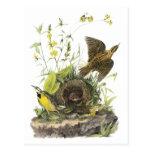 Audubon Meadowlard del este Tarjeta Postal