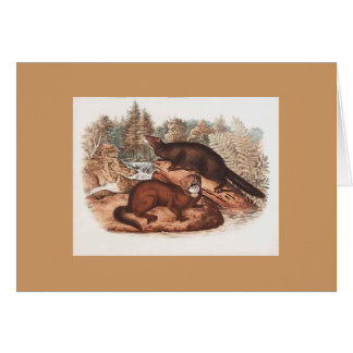Audubon - Mink Greeting Card