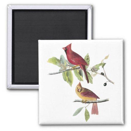 Audubon Northern Cardinal 2 Inch Square Magnet