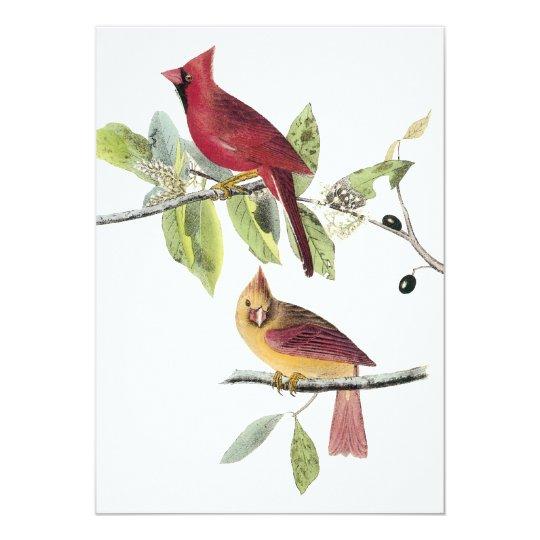 Audubon Northern Cardinal Card