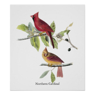 Audubon Northern Cardinal Print
