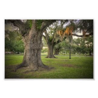 Audubon Park Live Oaks Photo Print