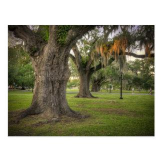 Audubon Park Live Oaks Post Cards