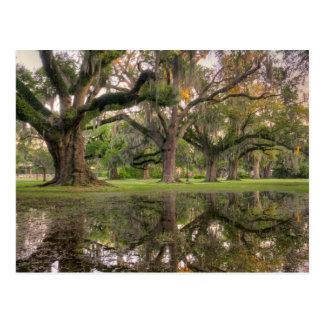 Audubon Park Rain Post Card