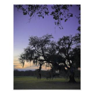 Audubon Park Sunset Photo Print