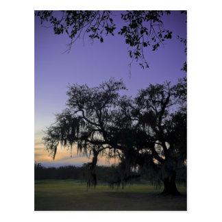 Audubon Park Sunset Post Cards