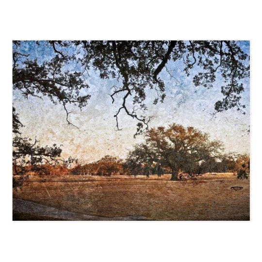 Audubon Park Sunset Textures Postcard