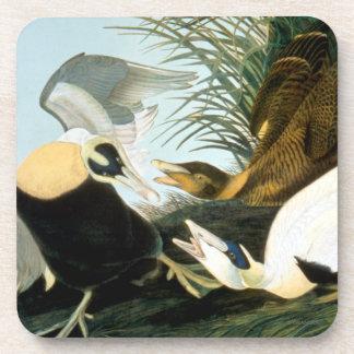 Audubon: Pato de eíder Posavasos De Bebida