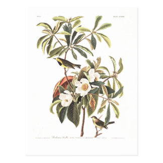Audubon Plate 185 Bachman's Warbler Postcard