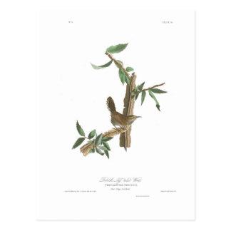 Audubon Plate 18 Bewick's Wren Postcard