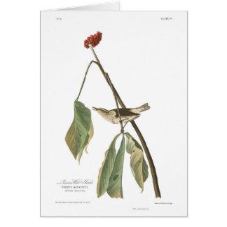 Audubon Plate 19 Louisiana Water Thrush Card