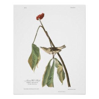 Audubon Plate 19 Louisiana Water Thrush Perfect Poster