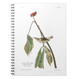 Audubon Plate 19 Louisiana Water Thrush Spiral Notebook