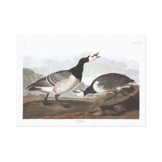 Audubon Plate 296 Barnacle Goose Canvas Print