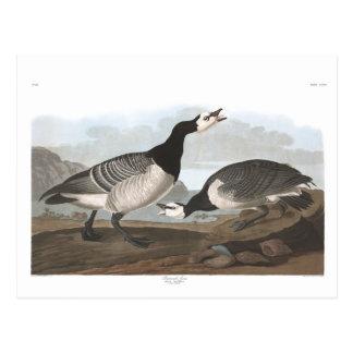 Audubon Plate 296 Barnacle Goose Postcard
