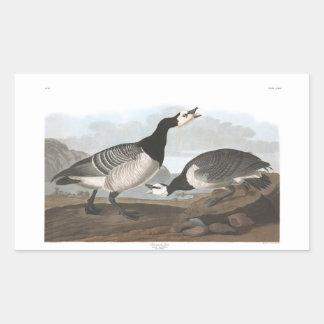Audubon Plate 296 Barnacle Goose Rectangular Sticker