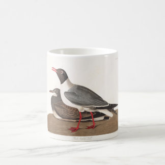 Audubon Plate 314 Black-Headed Gull Coffee Mug