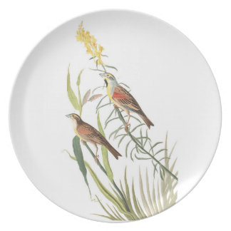Audubon Plate 384 Black-Throated Bunting