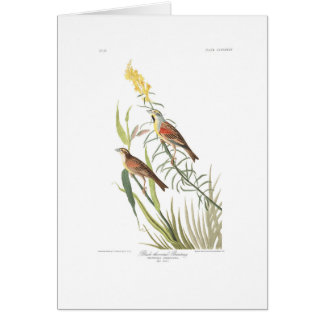 Audubon Plate 384 Black-Throated Bunting Card