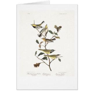 Audubon Plate 399 Black-throated Green Warbler Card