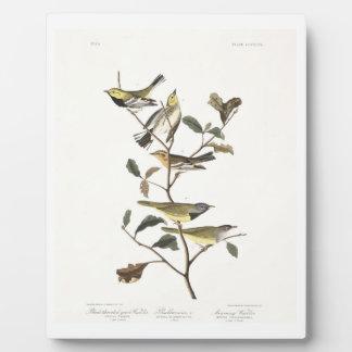 Audubon Plate 399 Black-throated Green Warbler Plaques