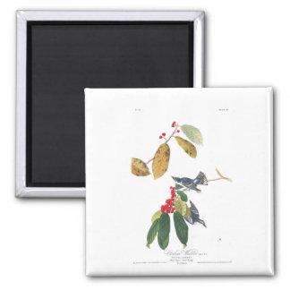 Audubon Plate 48 Azure Cerulean Warbler Magnet