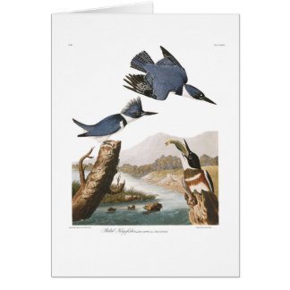 Audubon Plate 77 Belted Kingfisher Greeting Cards