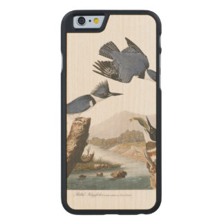 Audubon Plate 77 Belted Kingfisher Carved® Maple iPhone 6 Case
