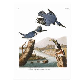 Audubon Plate 77 Belted Kingfisher Postcard