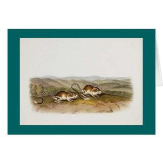 Audubon - Pouched Jerboa Mouse Card