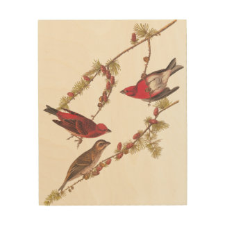 Audubon Purple Finch Red Birds Vintage Art