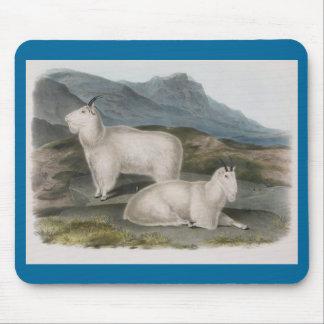 Audubon - Rocky Mountain Goat Mouse Pad