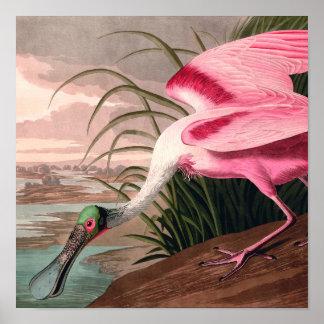 Audubon Roseate Spoonbill Bird Vintage Print