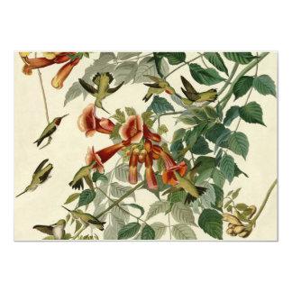 Audubon Ruby Throated Hummingbird Card