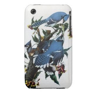 Audubon s Blue Jays Case iPhone 3 Cases