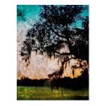 Audubon Sunset Textures Postcard